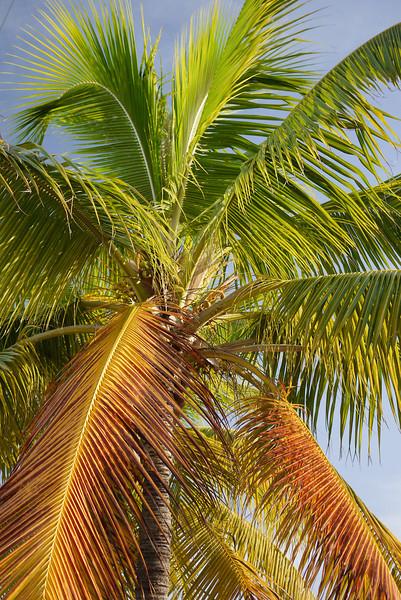 Key West Sightseeing-66.jpg