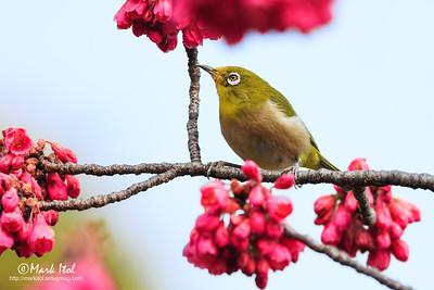 Japan Birds