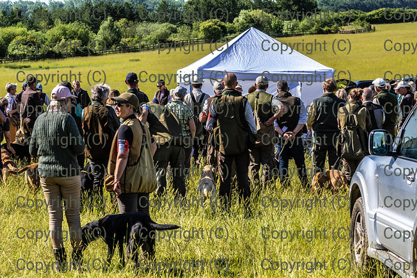 Capturing the day...mainly retrievers odd spaniels mixed bag