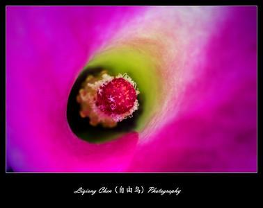 Unknown flower-5