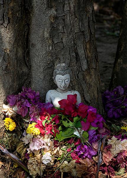randombuddha.jpg