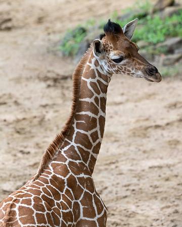 Dallas Zoo May 26, 2020
