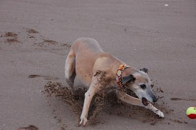 Tentsmuir Beach 21/09/2012