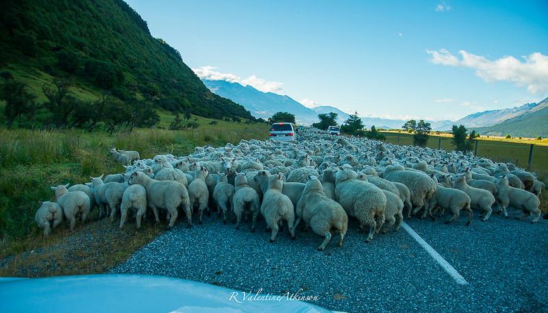 NZ 2016 best-50.jpg