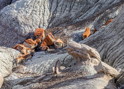 Petrified Forest and Painted Desert National Park
