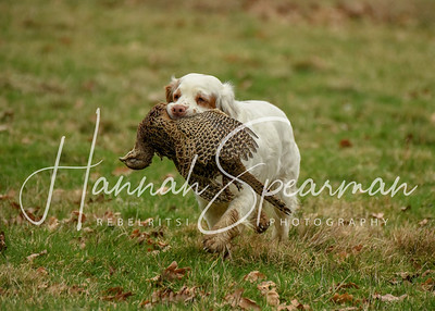 Working Minority Breed Spaniel Club shoot over day January 2019