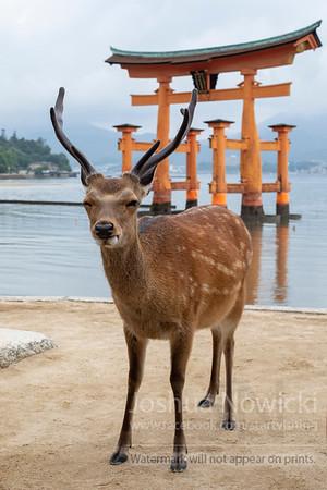 Japan - Various Locations