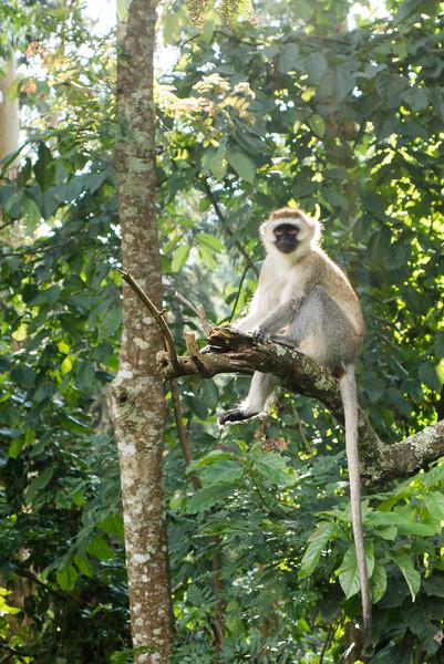 Nyugwe-Rwanda-59.jpg