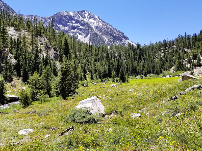 Our first real glimpse of the mountains - and a beautiful meadow of wildflowers