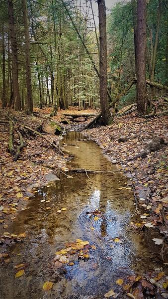 Wyville Creek East Branch 20201023_132347  G McKenna.jpg
