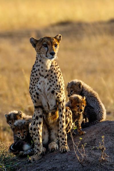 Kenya 2015-06325.jpg