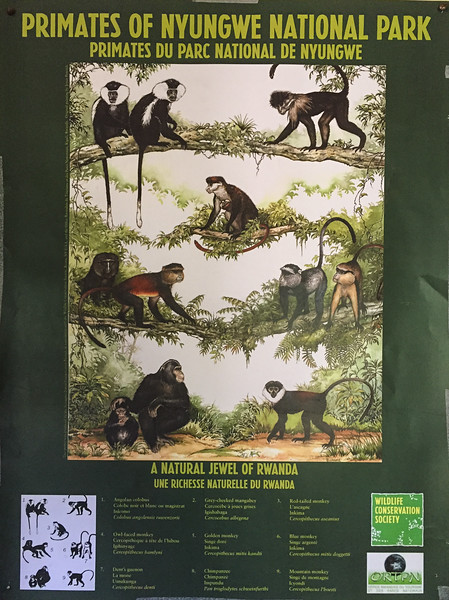 We saw 6 out 9 species of monkey during the trip