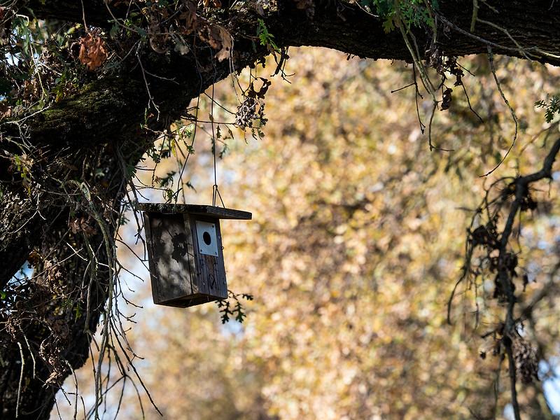 Putah birdhouse.jpg