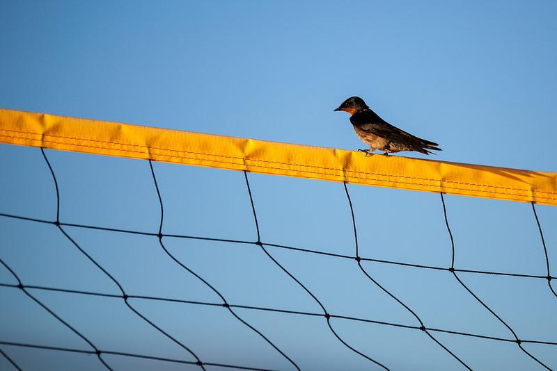 fiji bird-1.jpg