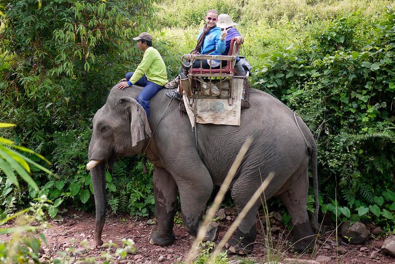 A huge bull elephant trekking in Laos.
