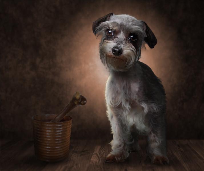 chien-nord-5.jpg