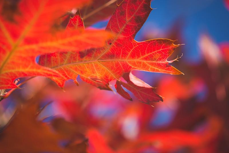 20151024-Fall Colors-91.jpg