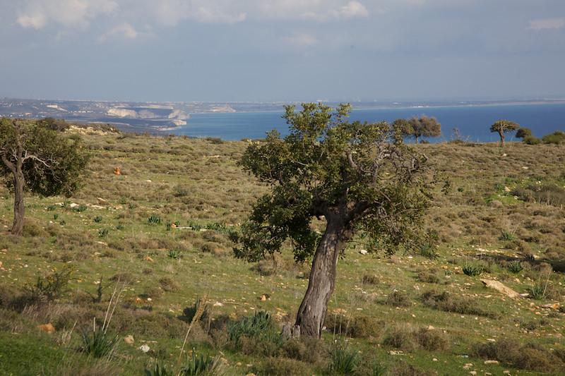 The Akrotiri peninsular