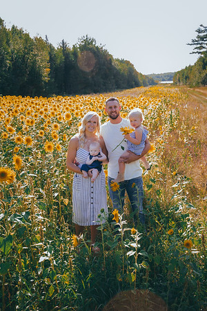 Sunflowers Wright