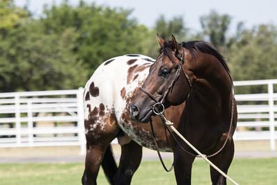 Iron Horse Ranch 2018