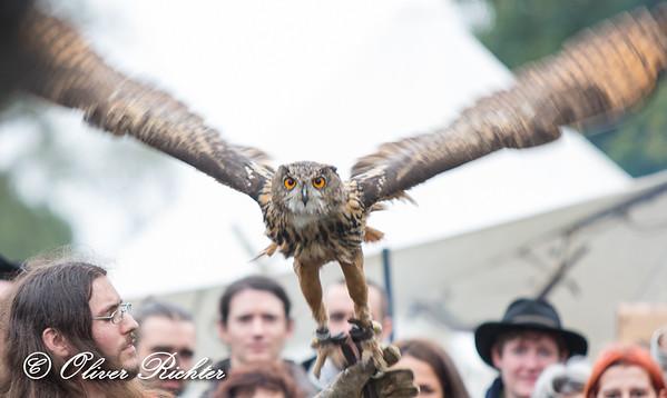 Festival Mediaval 2014 - birds