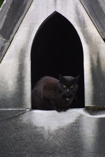 Cat in Gravestone Montemarte Cemetary Paris