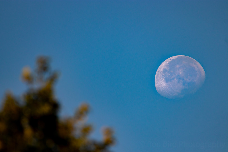 9.6.20 - Escalapia Hollow - Luna setting.
