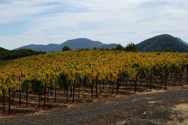 Krupp Brothers Vineyard Napa, California