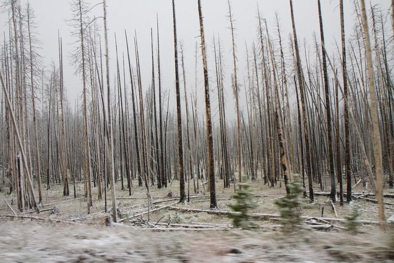 02_Yellowstone National Park_Montana_Wyoming-100.jpg