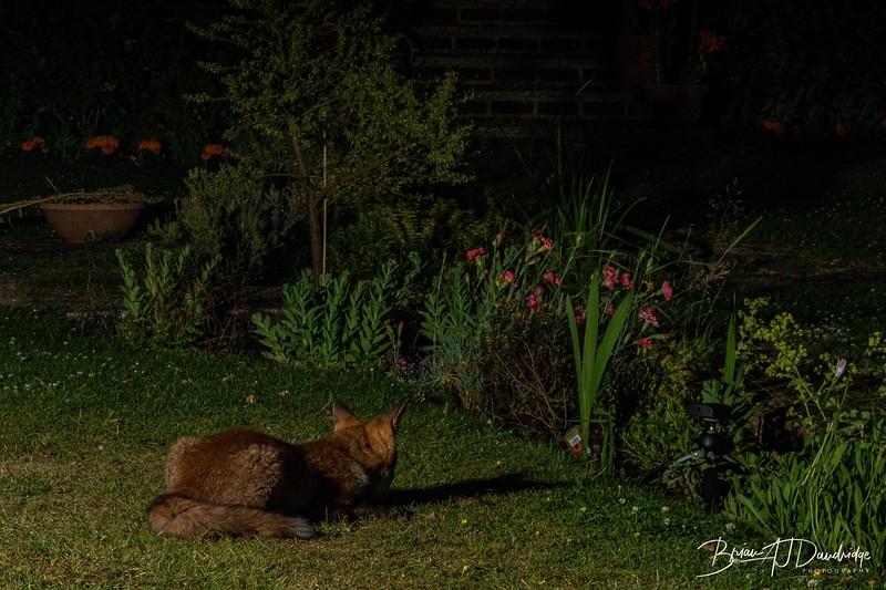 Garden Night Shoot-7278.jpg