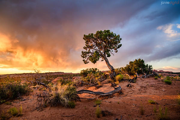 Moab Summer
