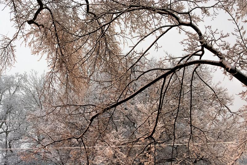 20140212-snow-DSC_4549.jpg