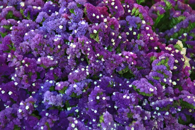 2016 valdivia purple flowers cu.jpg