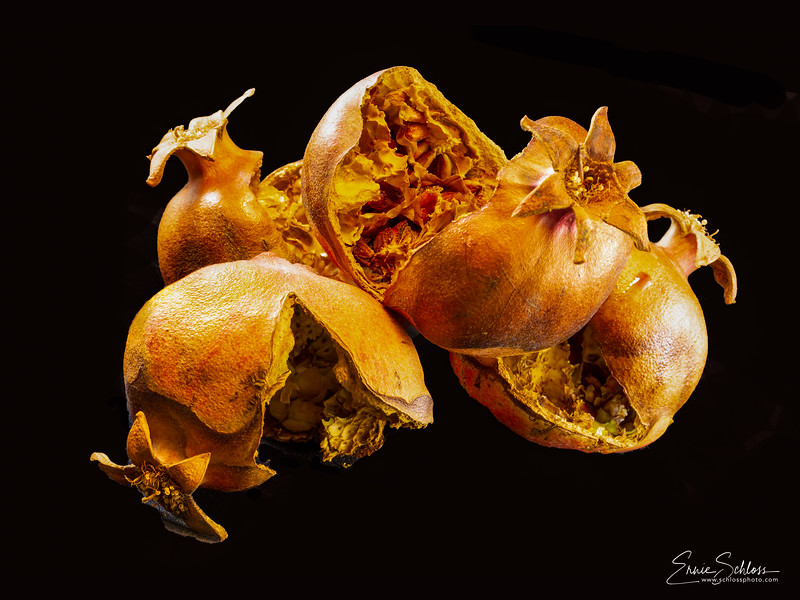 Schloss-E_OVLibrary_Pomegranate Still Life.jpg