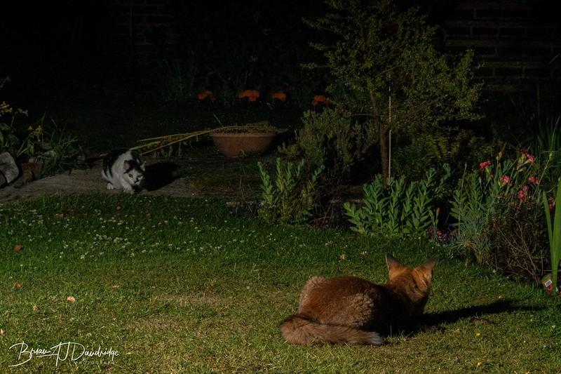 Garden Night Shoot-7281.jpg