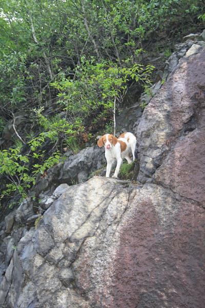 Dog Rescued from Rocks, SR309, Kline Township (5-30-2012)