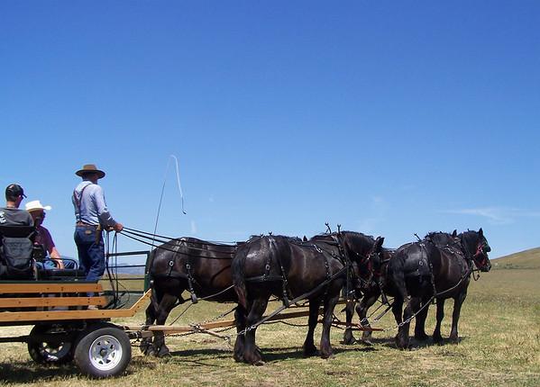 Horse Fair 2008