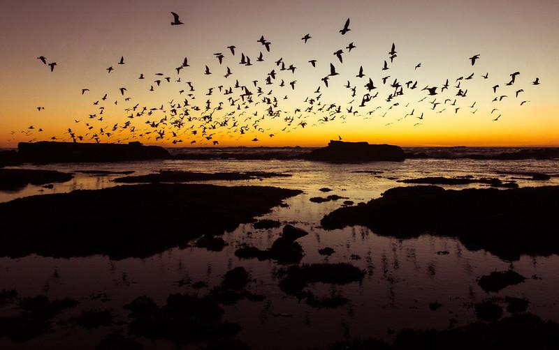 Half Moon Birds.jpg