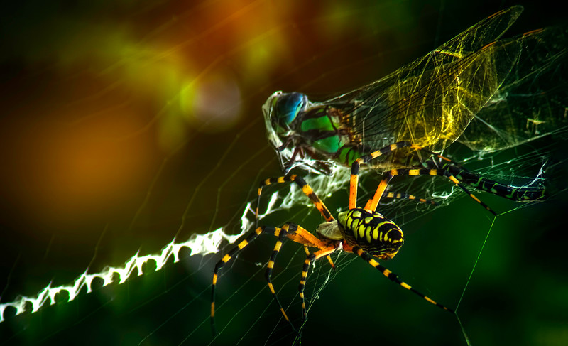 Spiders-Arachnids-036.jpg
