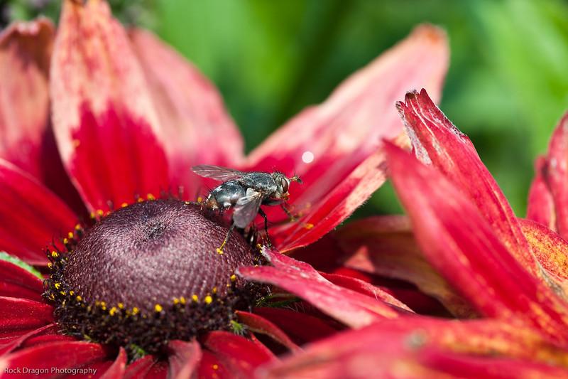 Flower, Calgary Zoo, Sept. 30
