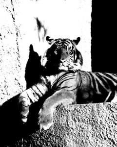 2008-01 Zoo