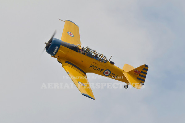 Canadian Harvards / Trainers