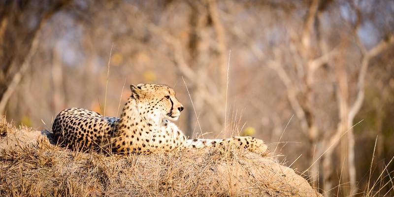 LeopardHills-20150825-1111.jpg