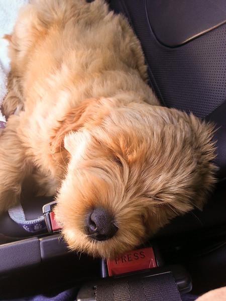 Teddy's first week