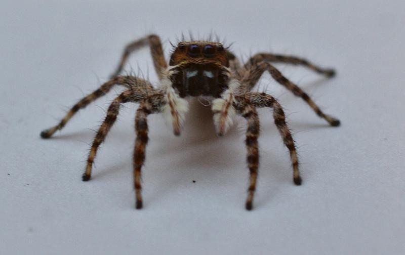 d01_spider2.jpg