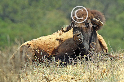 Wildlife Photography Portfolio 2