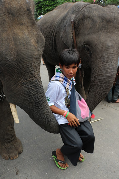 2014-11-14 Surin Elephant Welcome Feast 705.JPG