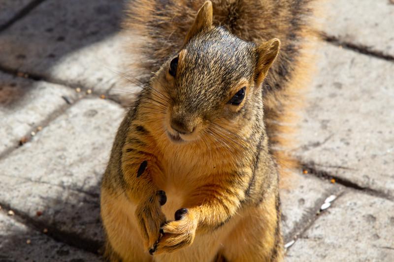 Squirrel Pet Yard Bird Feeder May 1 2020_23.jpg