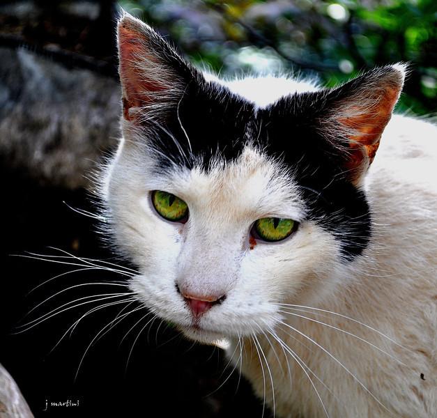 cat whiskers 6-18-2013.jpg