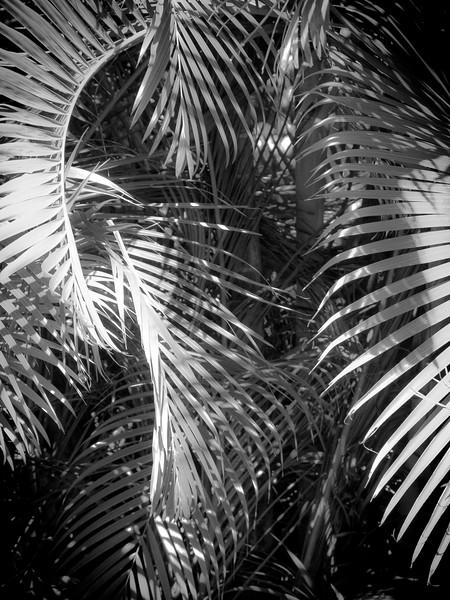 13 Palms - No. 5